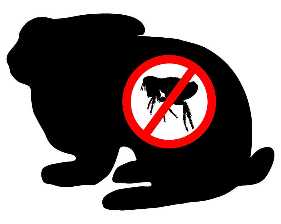 Fleas on rabbits