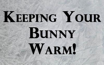Winter Rabbit Safety