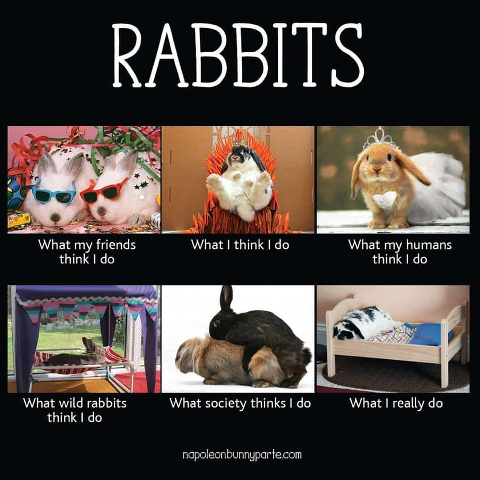 Meme Of Rabbits