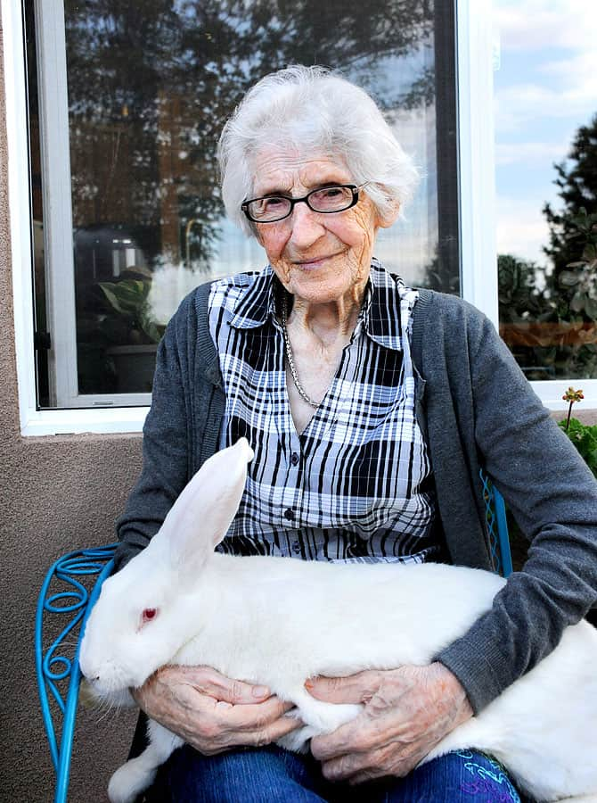 Image of a lady with a Felmish Giant Rabbit