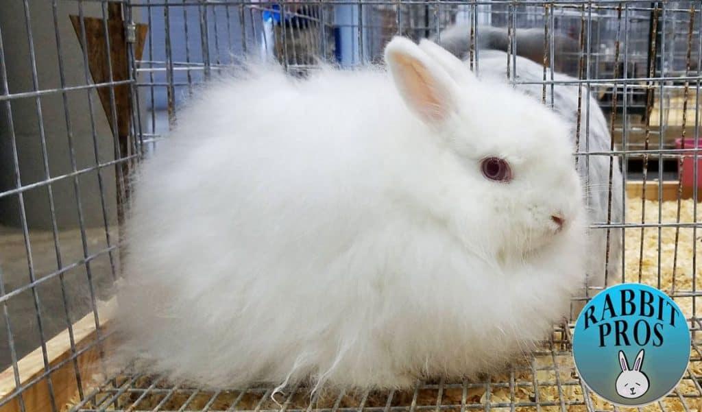 Image of Jersey Wool Rabbit