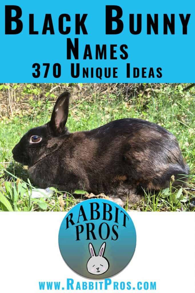 Photo of a Pinterest Pin For a Black Rabbit With Names