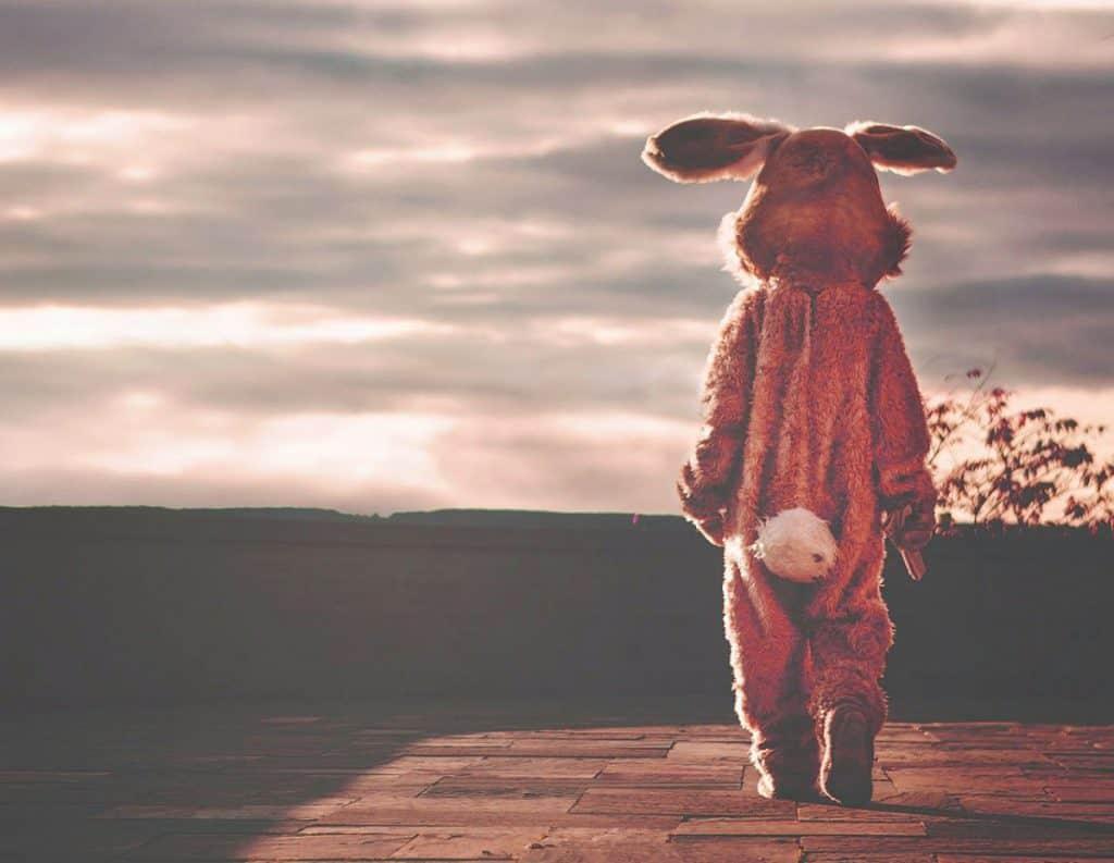 Image of rabbit alone
