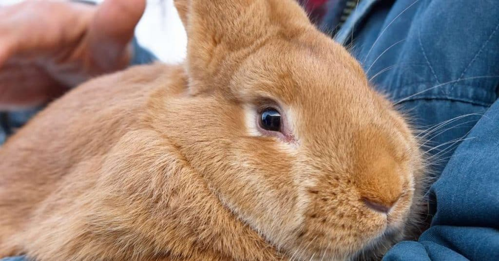 Does your bunny recognize you