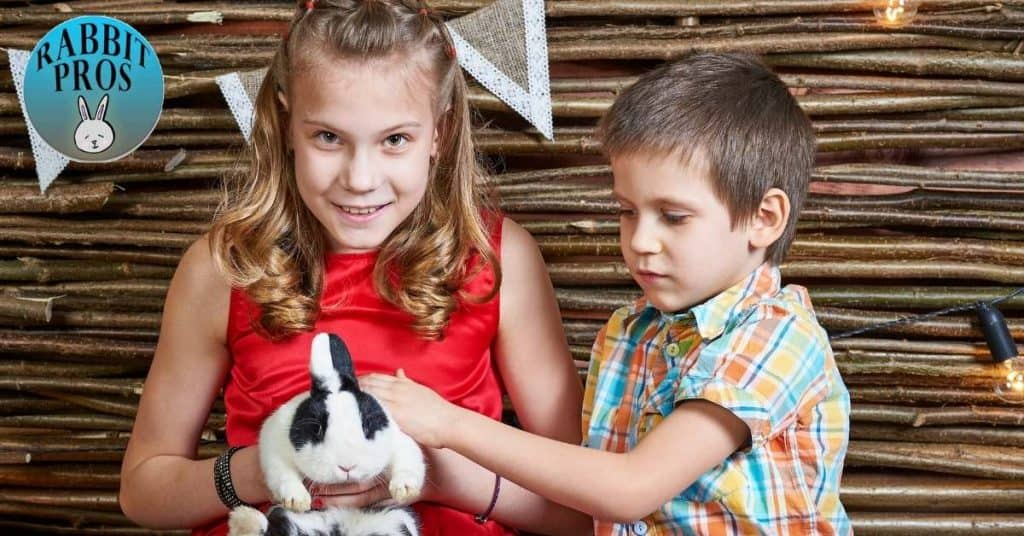 boy or girl bunny